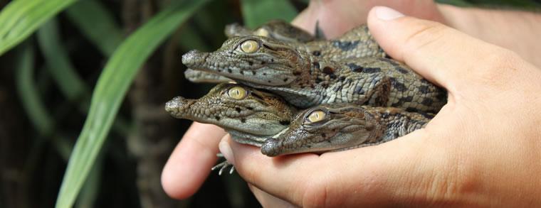 Krokodillenboerderij - Ardechefriends.com