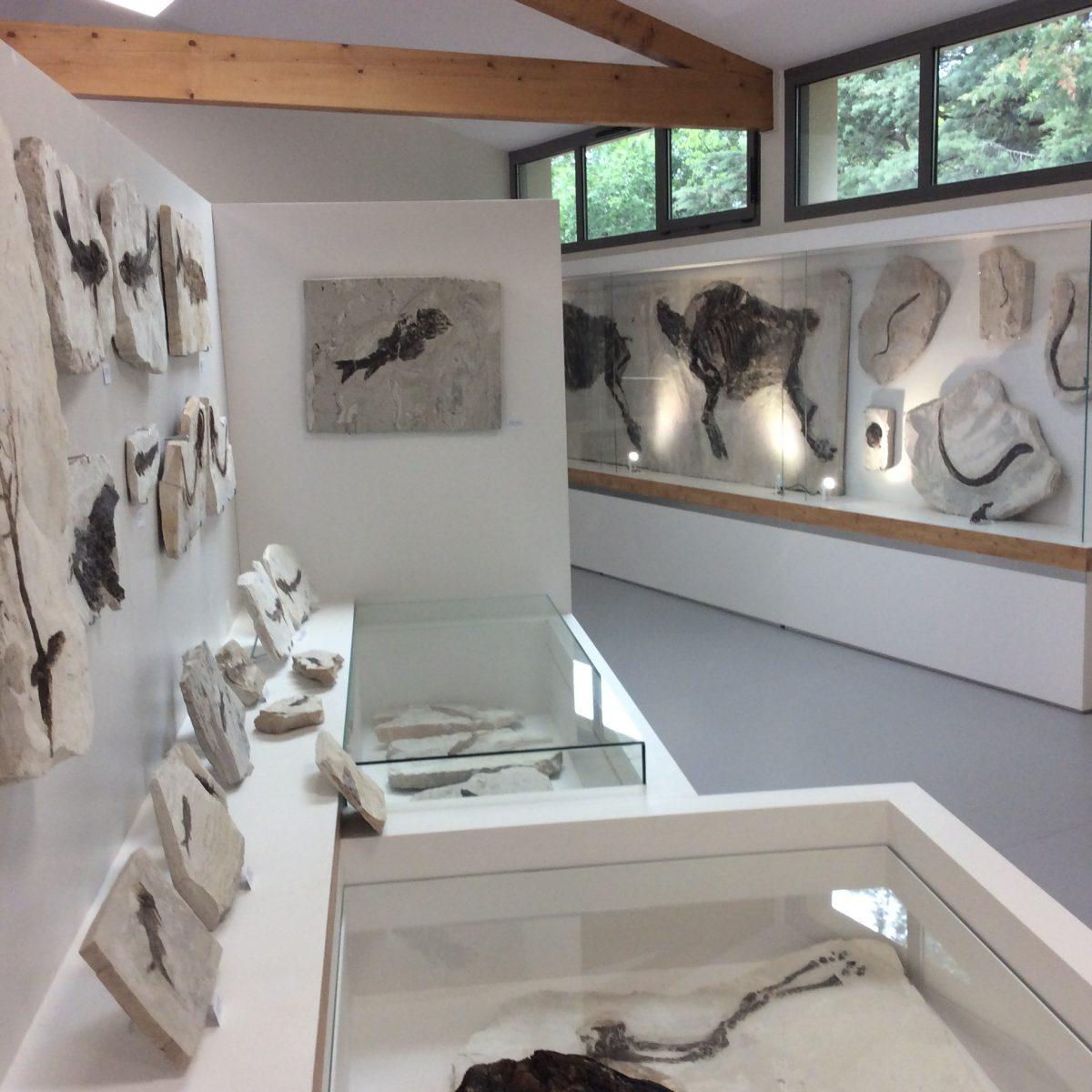 Fossielenmuseum - Museum de l'Ardeche Balazuc - Ardechefriends.com