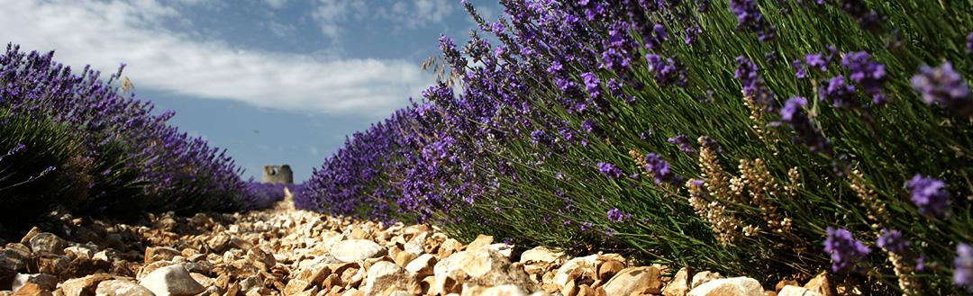 Lavendelmuseum Saint-Remèze - Ardechefriends.com